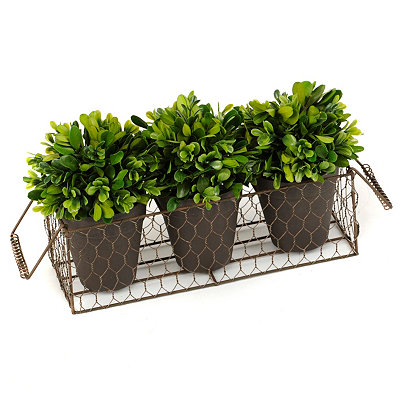 Vintage Charm Collection boxwood trio